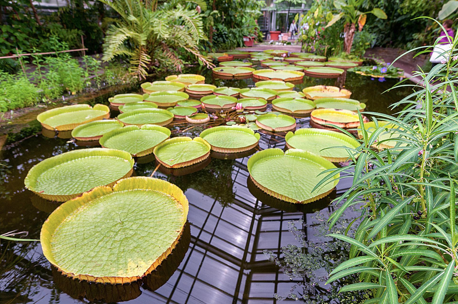 Botanischer Garten Bonn - Fotos - Botanischer Garten
