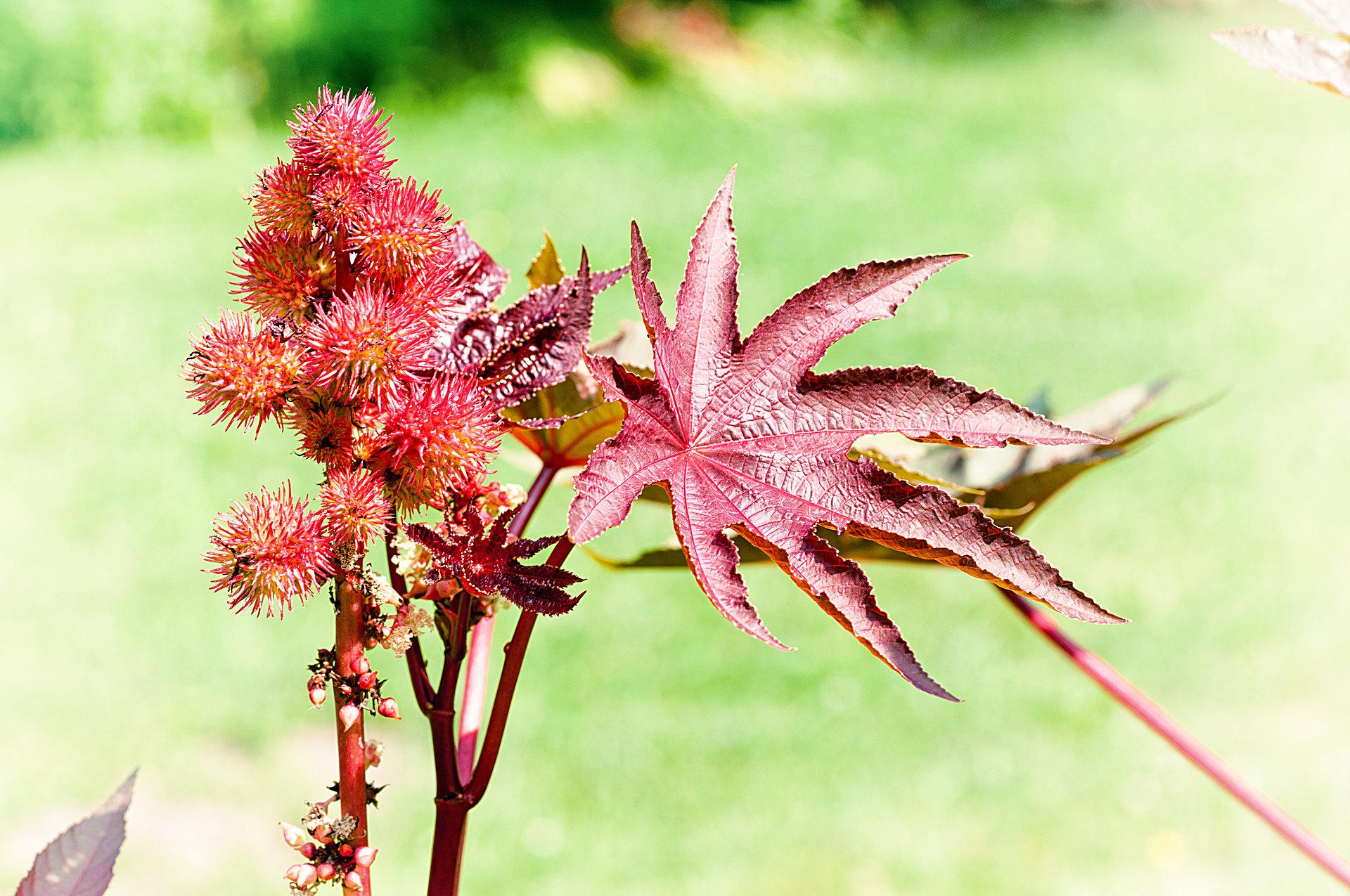 Botanischer garten darmstadt fotos botanischer garten - Garten fotos ...