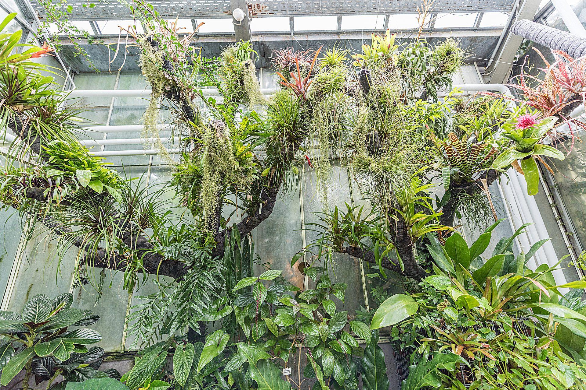 Botanischer Garten Erlangen - Botanischer Garten