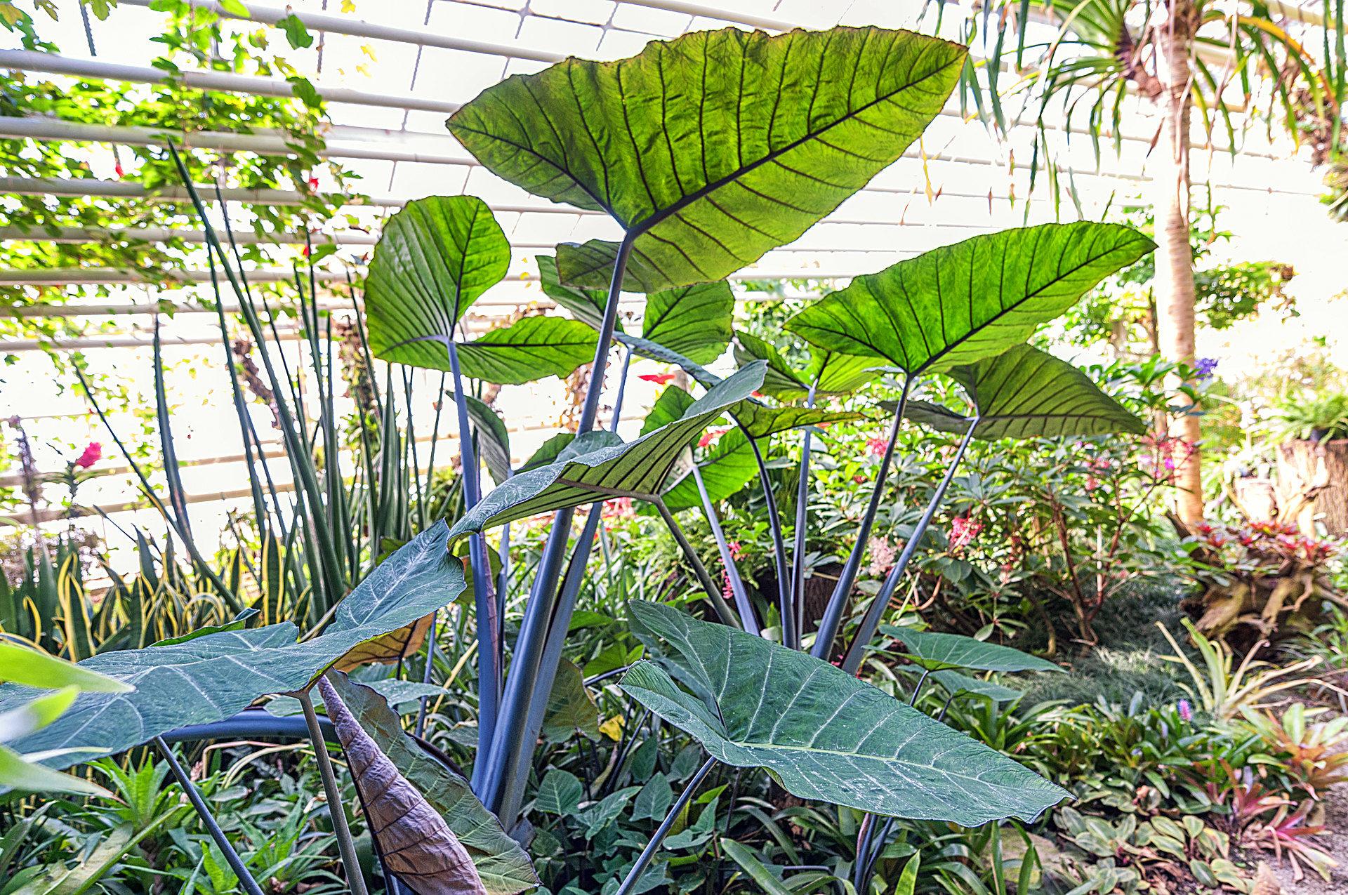 öffnungszeiten Botanischer Garten Zuhause Image Idee