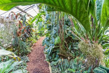 Botanischer Garten Mainz - Gewächshaus