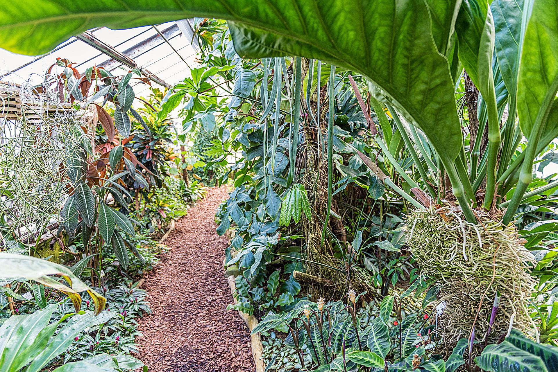 Botanischer Garten Mainz - Botanischer Garten