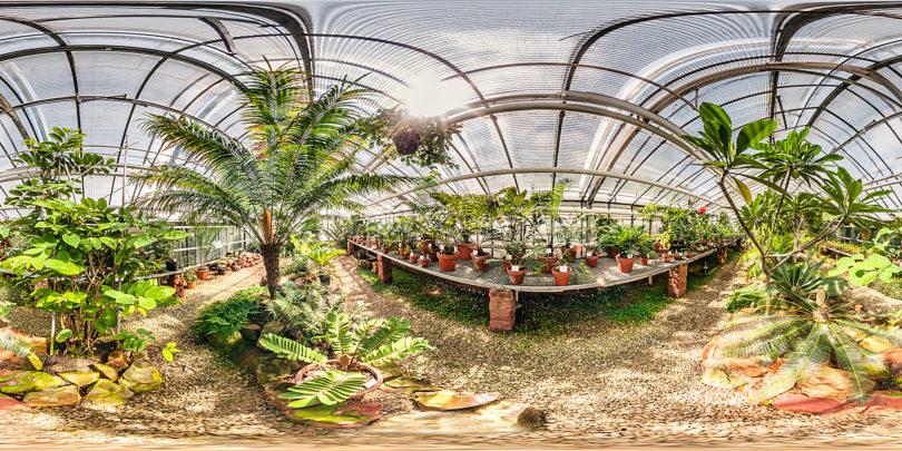 Botanischer Garten Mainz - Cycadeenhaus