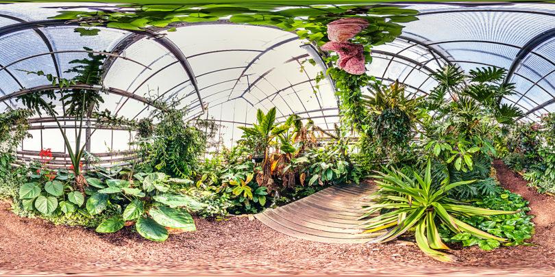 Botanischer Garten Mainz - Gewächshaus Unterwuchs tropischer Wälder