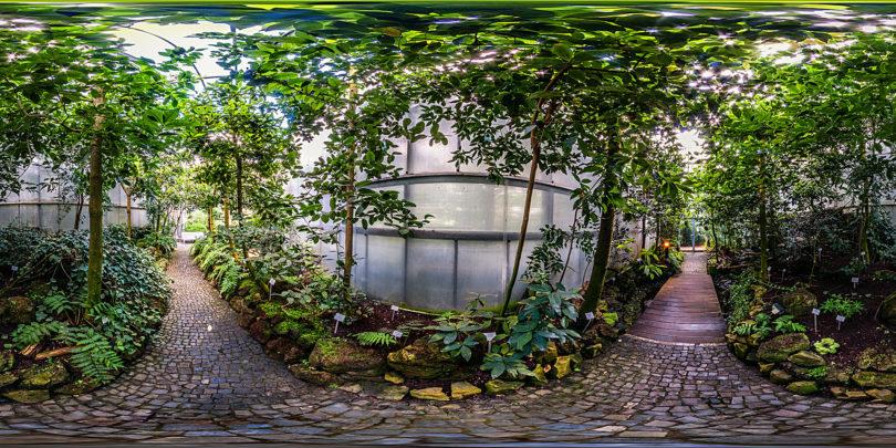 Botanischer Garten Marburg - Lorbeerwald