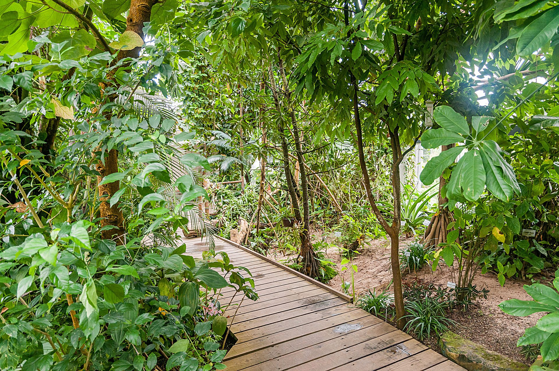 Botanischer garten w rzburg tropenschauhaus - Garten fotos ...