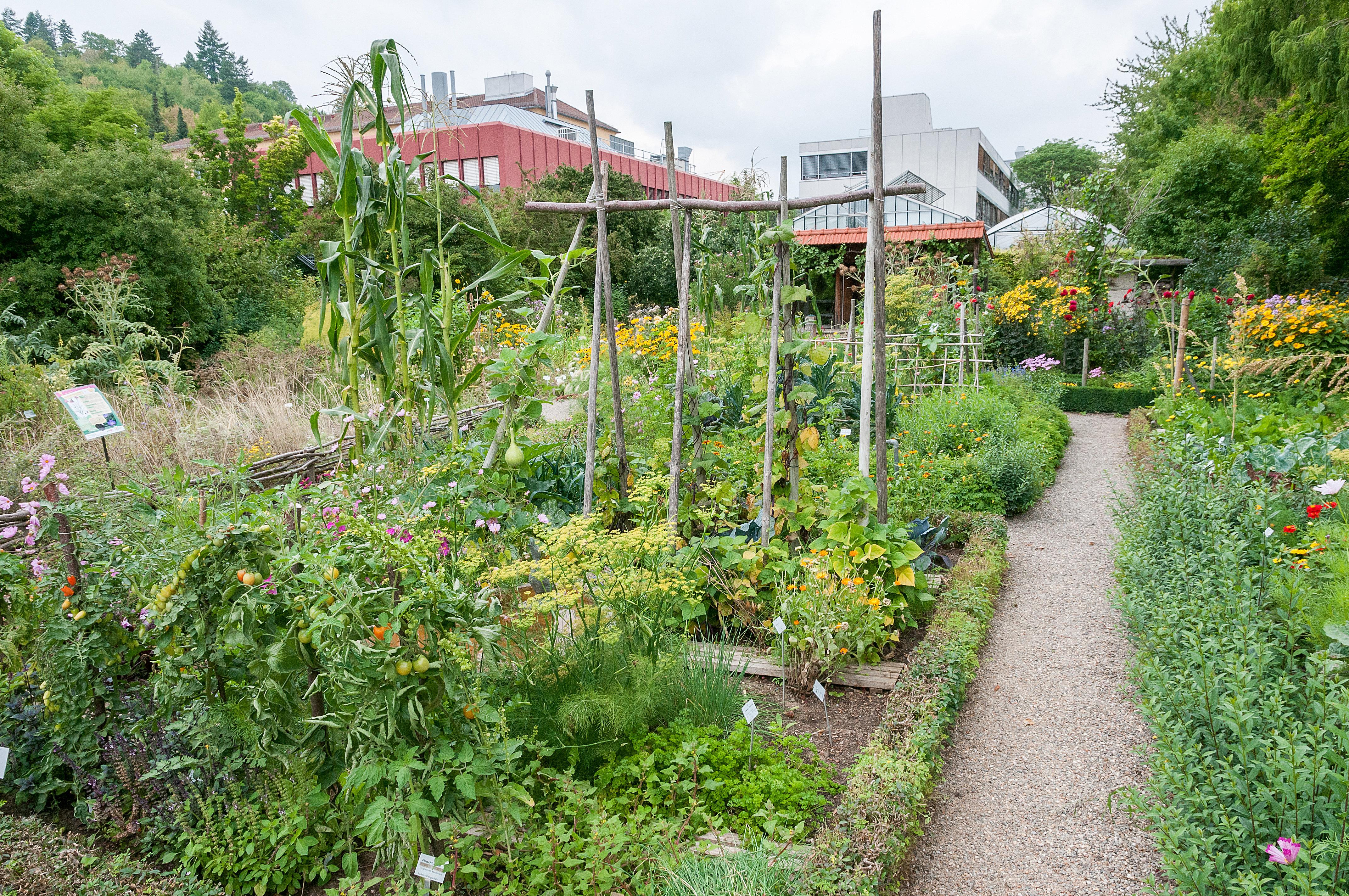 Botanischer garten w rzburg bauerngarten botanischer for Gartengestaltung chemnitz