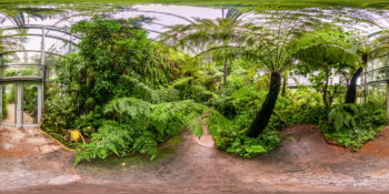 Botanischer Garten Würzburg – Tropenschauhaus Bergregenwald