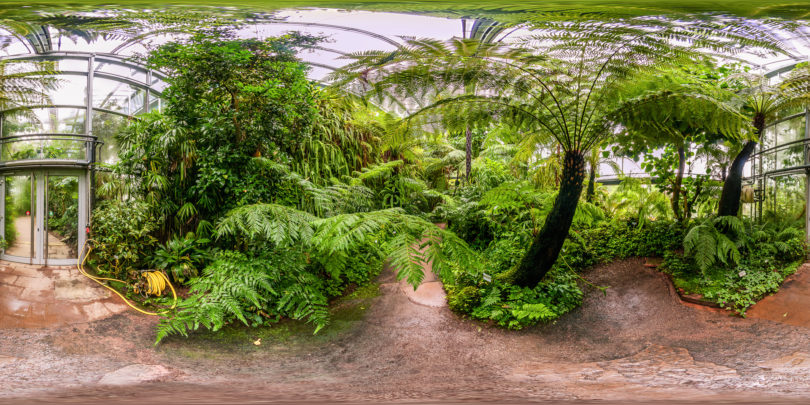 Botanischer Garten Würzburg - Tropenschauhaus Bergregenwald