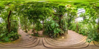 Botanischer Garten Würzburg - Tropenschauhaus Tieflandregenwald