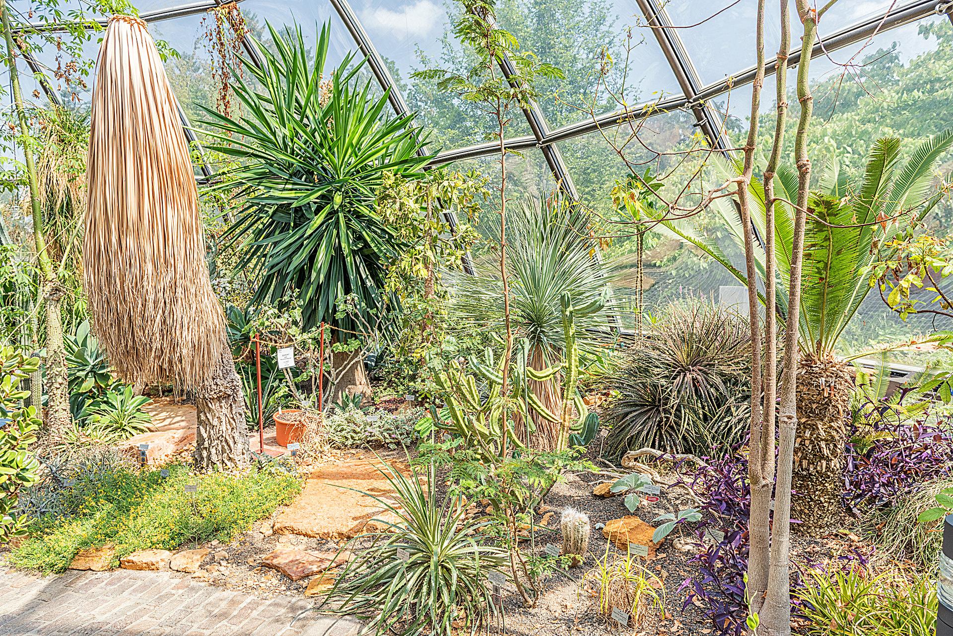 Botanischer Garten Zürich - Tropenhaus Tropische Trockengebiete - Botanischer Garten