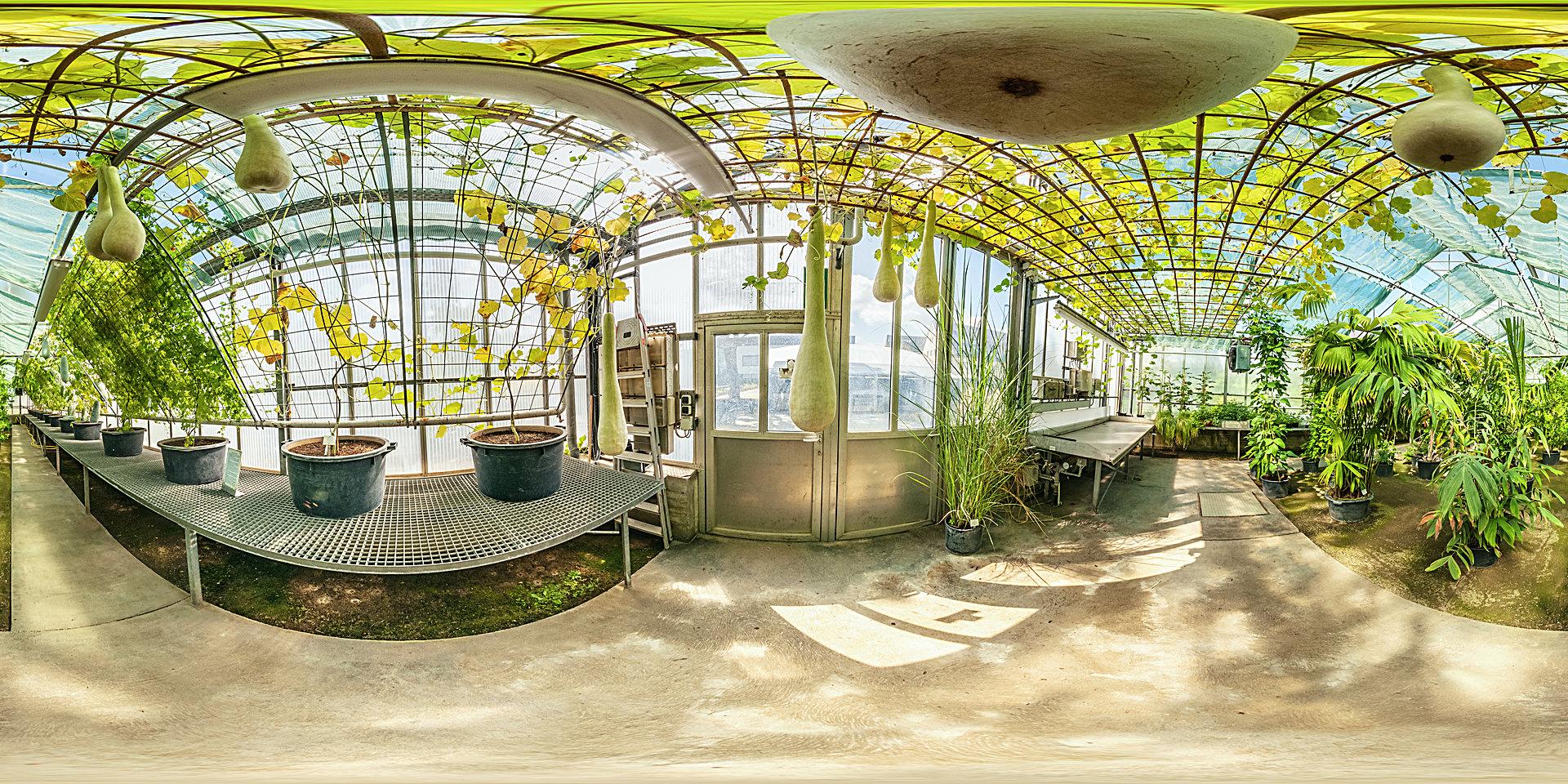 botanischer garten mainz gew chshaus tropische. Black Bedroom Furniture Sets. Home Design Ideas