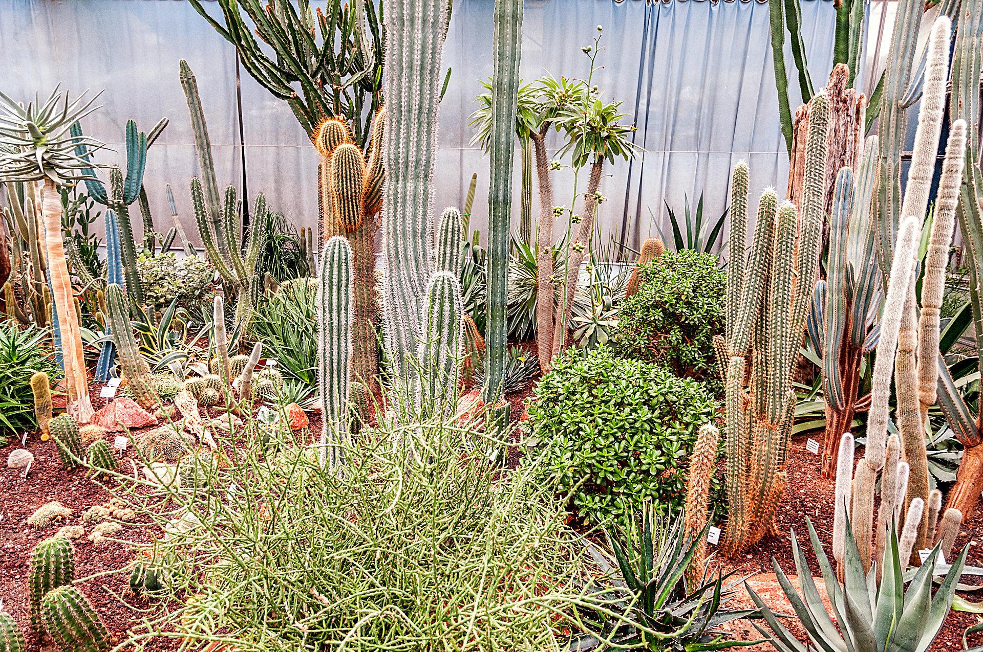 luisenpark mannheim fotos botanischer garten. Black Bedroom Furniture Sets. Home Design Ideas