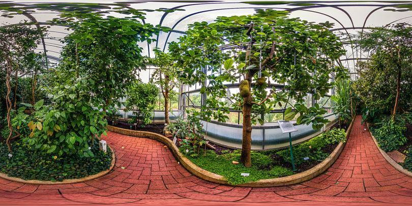 Botanischer Garten Marburg - Nutzpflanzenhaus