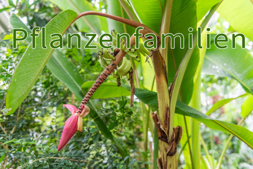 Pflanzenfamilien