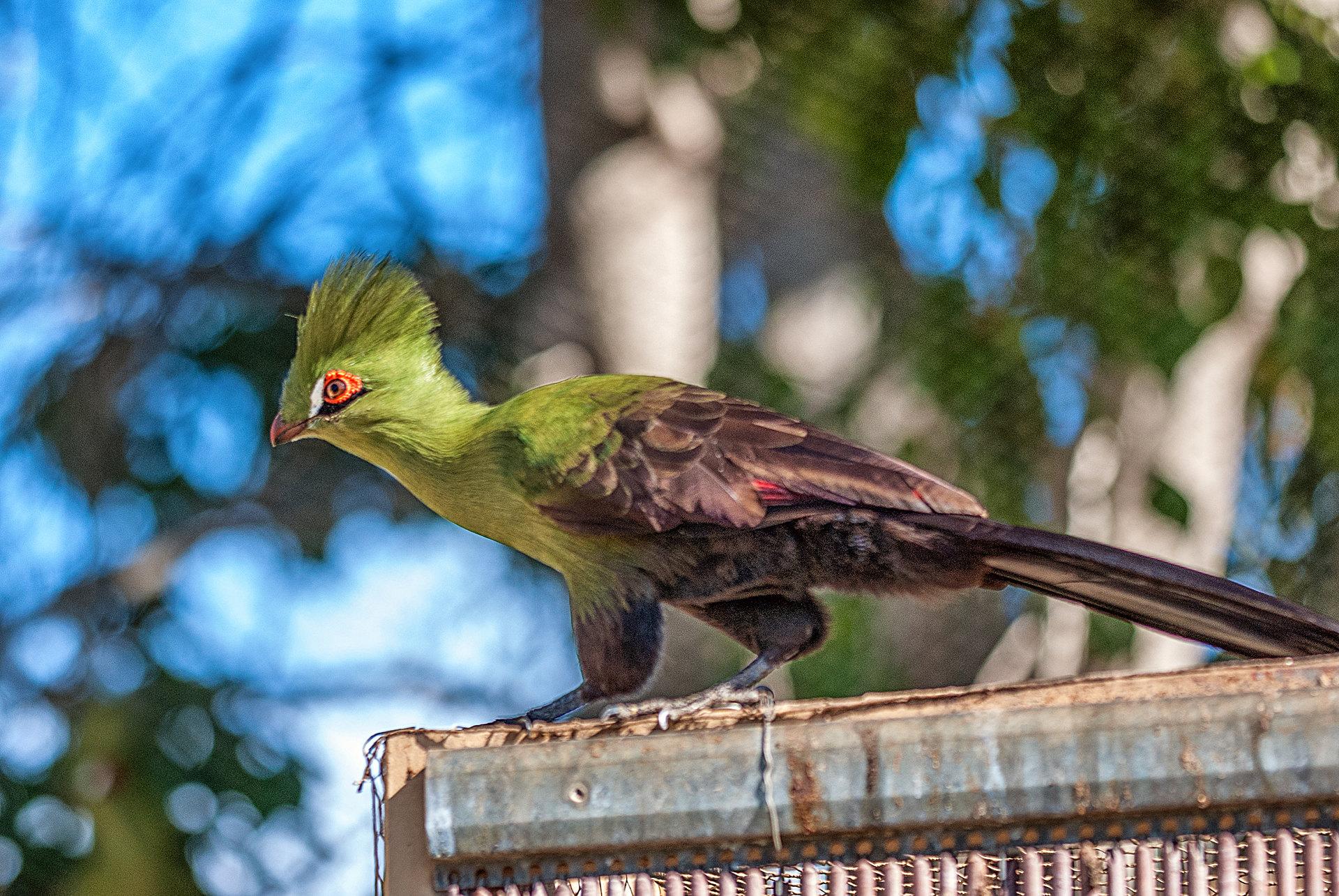 Vogelpark La Palma - El Paso