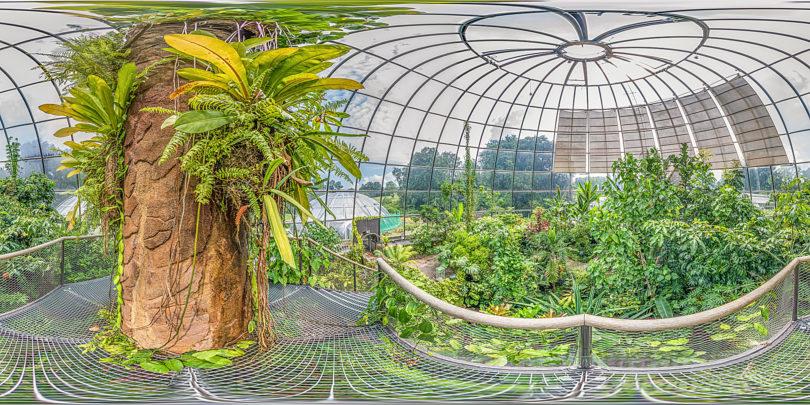 Botanischer Garten Zürich - Tropenhaus Tiefland