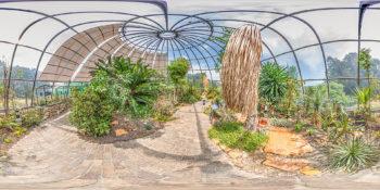 Botanischer Garten Zürich - Tropenhaus Trockengebiete